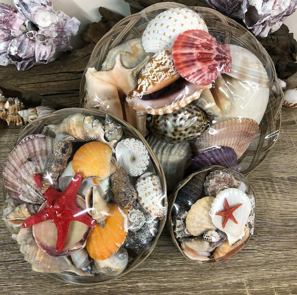 Basket of Real Sea Shells Home Bathroom Decor | Aquarium | Crafts - 3 Sizes